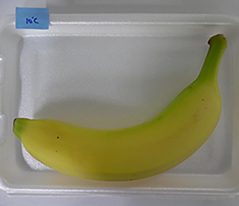 냉장고 갤러리